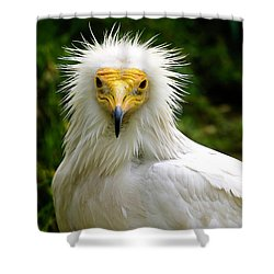 Egyptian Vulture Shower Curtain