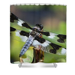 Eight-spotted Skimmer  Shower Curtain