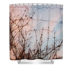 Elder Branches Silhouette Shower Curtain by Sandra Foster