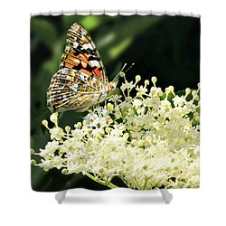 Elderflower And Butterfly Shower Curtain