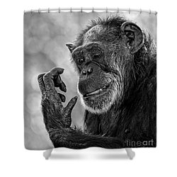 Elderly Chimp Studying Her Hand Shower Curtain