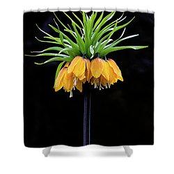 Shower Curtain featuring the photograph Elegance by Elvira Butler