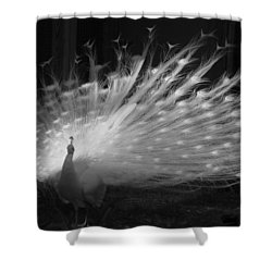 Elegant In White Shower Curtain by Margaret Bobb