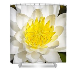 Elegant Lotus Shower Curtain by Christopher L Thomley