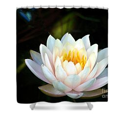 Elegant White Water Lily Shower Curtain