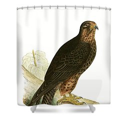 Eleonora Falcon Shower Curtain by English School