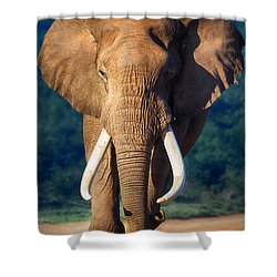 Elephant Approaching Shower Curtain by Johan Swanepoel