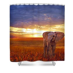 Elephant Baby Shower Curtain