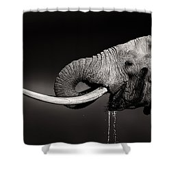 Elephant Bull Drinking Water - Duetone Shower Curtain