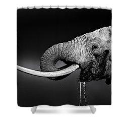 Elephant Bull Drinking Water Shower Curtain