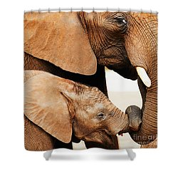 Elephant Calf And Mother Close Together Shower Curtain