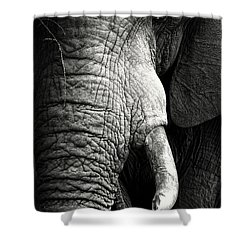 Elephant Close-up Portrait Shower Curtain