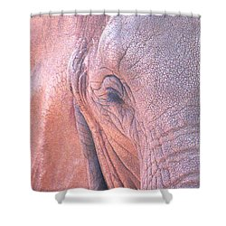 Elephant Ears Shower Curtain