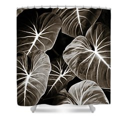 Elephant Ears On Parade Shower Curtain by Marilyn Hunt