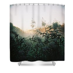 Elephant Grass At Dawn Shower Curtain