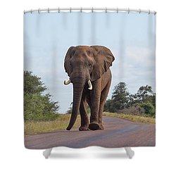 Elephant In Kruger Shower Curtain