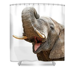 Elephant Mouth Open Trunk Up Closeup Shower Curtain