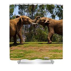 Elephant Play 3 Shower Curtain