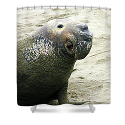 Shower Curtain featuring the photograph Elephant Seal by Anthony Jones