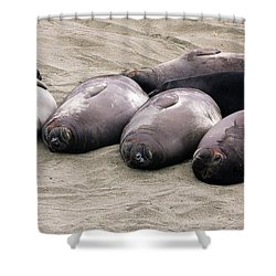 Elephant Seals Shower Curtain