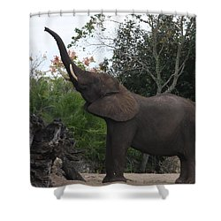 Shower Curtain featuring the photograph Elephant Time by Vadim Levin