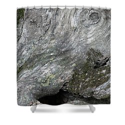 Shower Curtain featuring the photograph Elephant Trunk by Dale Kincaid
