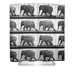 Elephant Walking Shower Curtain by Eadweard Muybridge