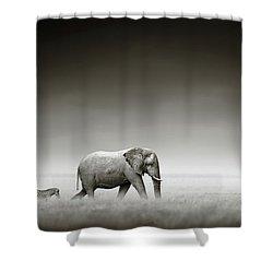 Elephant With Zebra Shower Curtain
