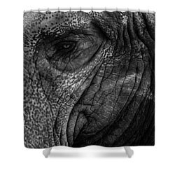 Elephants Eye Shower Curtain by Keith Allen