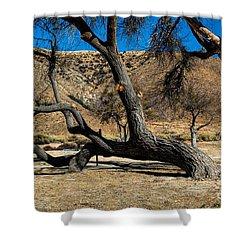 Elizabeth Lake Tree Shower Curtain