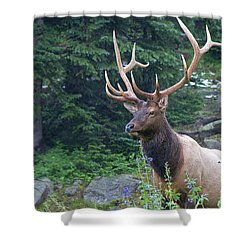Shower Curtain featuring the photograph Elk 4 by Gary Lengyel