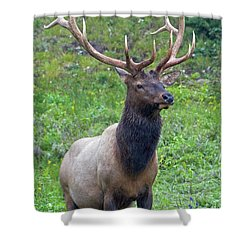 Shower Curtain featuring the photograph Elk 5 by Gary Lengyel