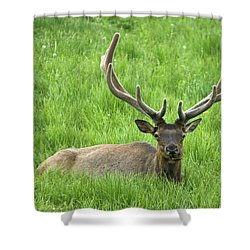 Shower Curtain featuring the photograph Elk 6 by Gary Lengyel