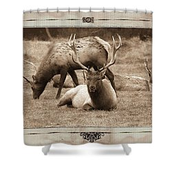 Shower Curtain featuring the photograph Elk by Athala Carole Bruckner