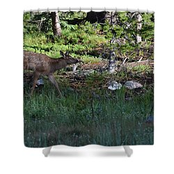 Baby Elk Rmnp Co Shower Curtain