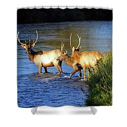 Elk Shower Curtain by Cindy Murphy - NightVisions