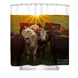 Elk County Herd Shower Curtain