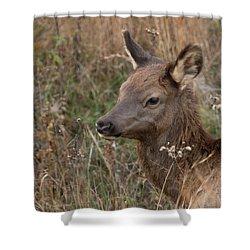 Elk Fawn Shower Curtain