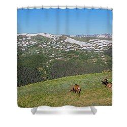 Elk Grazing In Rmnp Shower Curtain by John Roberts