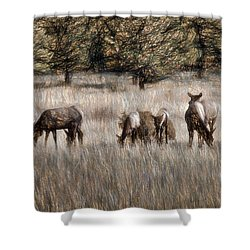 Elk Grazing Shower Curtain