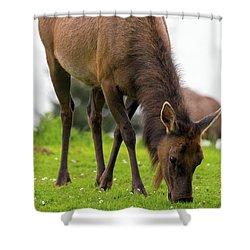 Elk Grazing On Green Pasture Closeup Shower Curtain