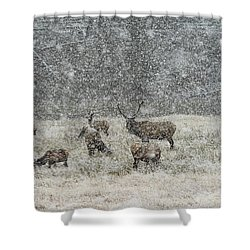 Elk Harem In Falling Snow Shower Curtain