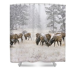 Elk In A Snow Storm - 1135 Shower Curtain