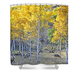 Elk In Rmnp Colorado Shower Curtain