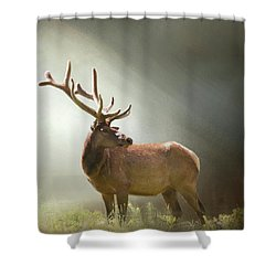 Shower Curtain featuring the photograph Elk In Suns Rays by David and Carol Kelly