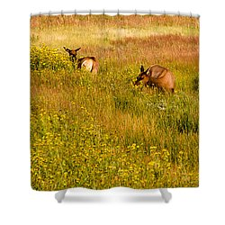 Shower Curtain featuring the photograph Elk In The Wild Flowers by Cathy Donohoue