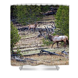 Elk In Yellowstone Shower Curtain