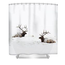 Elk Laying In A Snow Covered Meadow - 9069 Shower Curtain