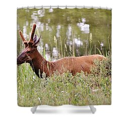 Elk Of Jasper... Shower Curtain