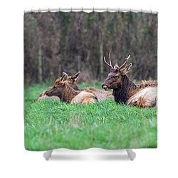Shower Curtain featuring the photograph Elk Relaxing by Paul Freidlund